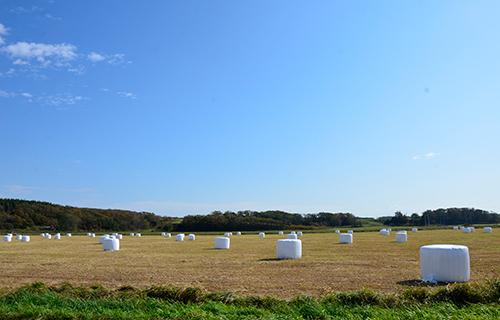 天塩の牧場風景
