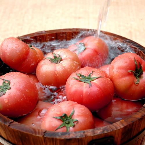 りょくけんトマト水浴び